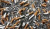 Tobacco causing 'massive harm' to environment: WHO